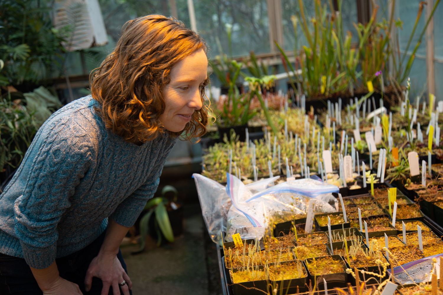 Jennifer Gremer looks at some sprouts