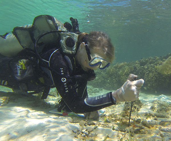 Williams takes sediment measurements from a seagrass plot in Sulawesi, Indonesia.