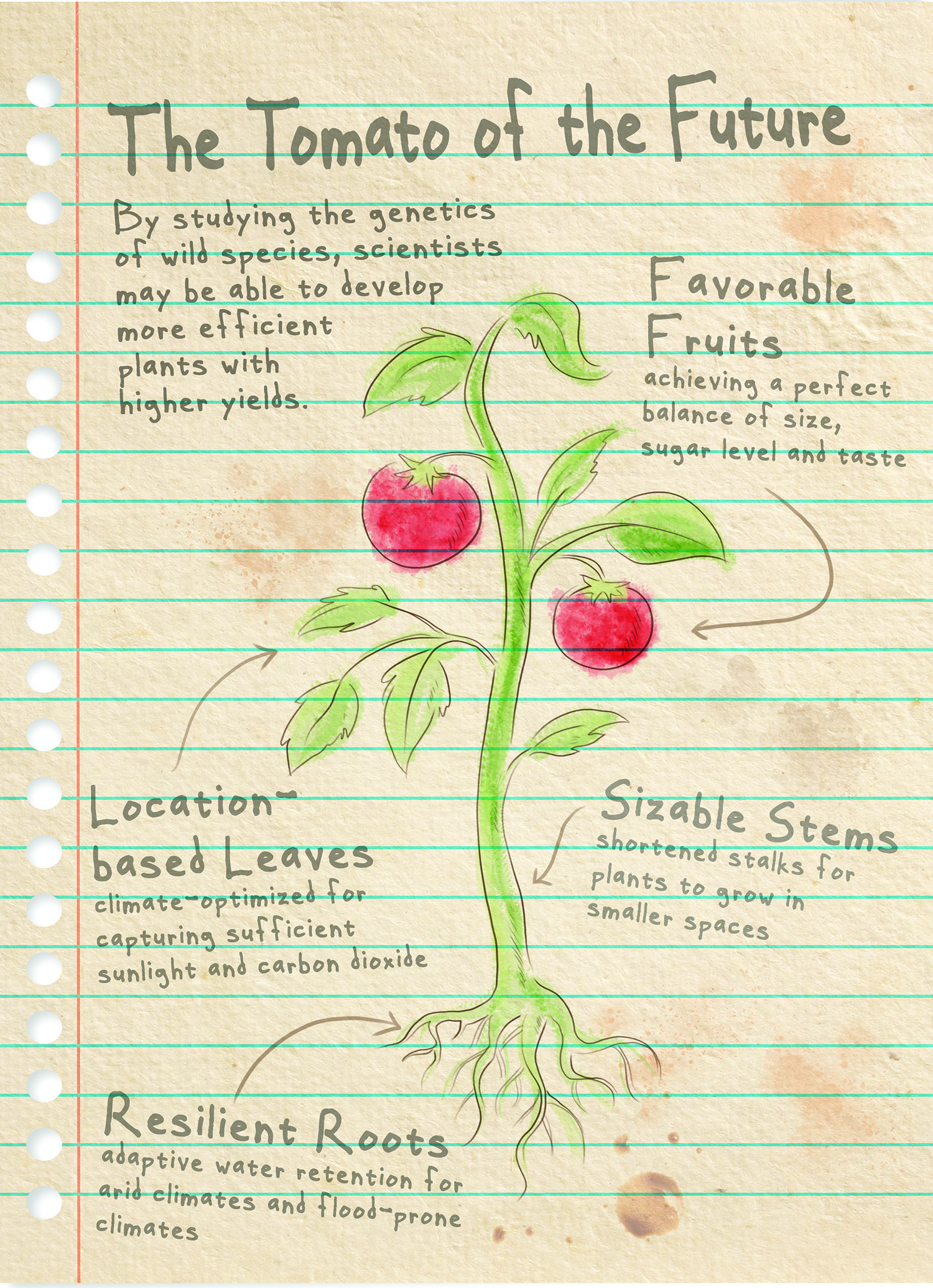A field guide to the tomato of the future