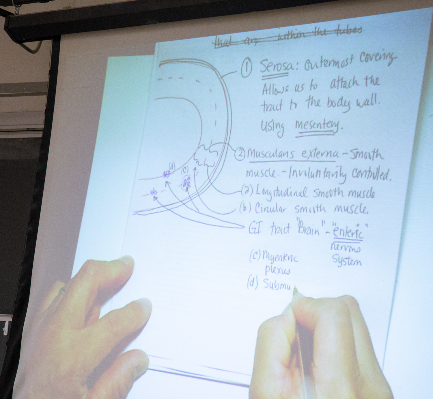 Erwin Bautista maps out anatomical concepts for his students. David Slipher/UC Davis