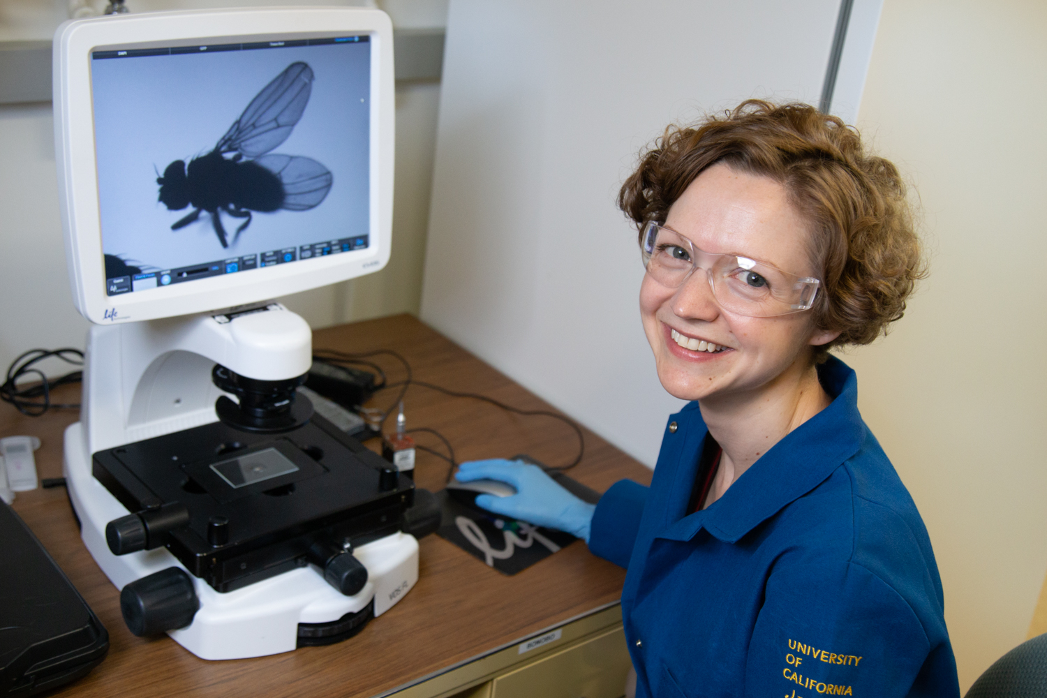 Kassandra Ori-McKenney images a fly in her lab. David Slipher/UC Davis