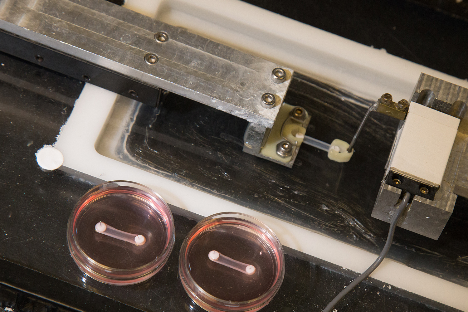 The engineered ligaments, in pink Petri dishes, are attached to anchors and stretched on a small rack-like device which tests and precisely measures their tensile strength. David Slipher/UC Davis