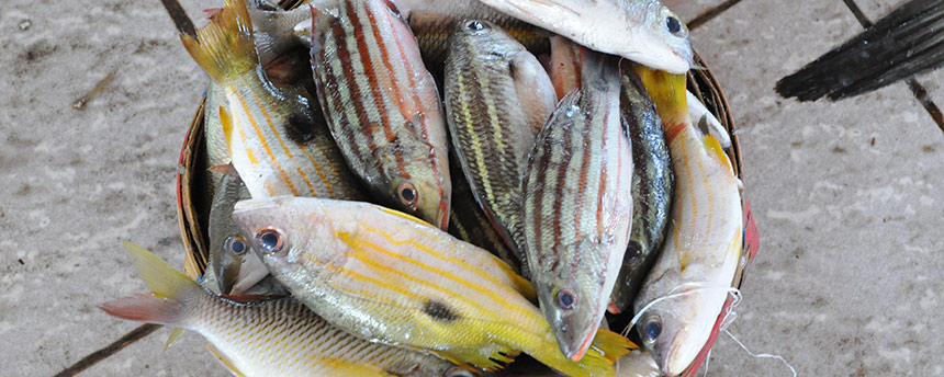 UC Davis researchers found plastic and fibrous debris in 25 percent of the fish sold in Indonesian and California markets. (Dale Trockel/UC Davis)