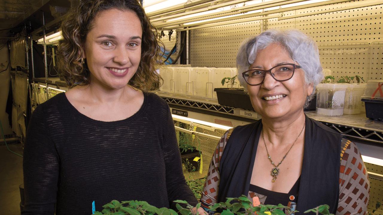 Grains in the Rain: Study Opens the Door to Flood-Resistant Crops