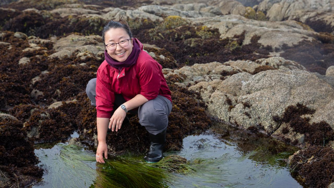 Grace Ha sifts through a tide pool in Horseshoe Cove