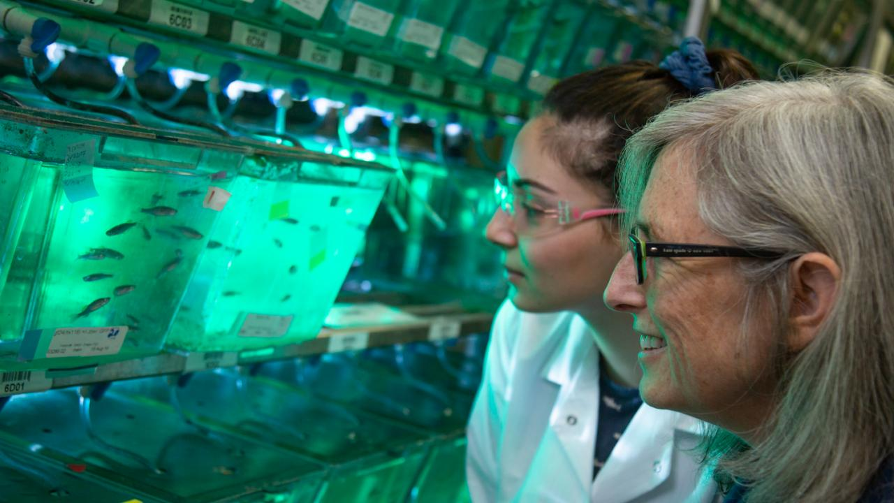 Student Masuda Sharifi and Professor Sean Burgess look at some zebrafish