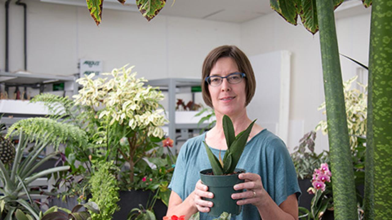 Stacey Harmer visits the Life Sciences Building Greenhouse. David Slipher/UC Davis