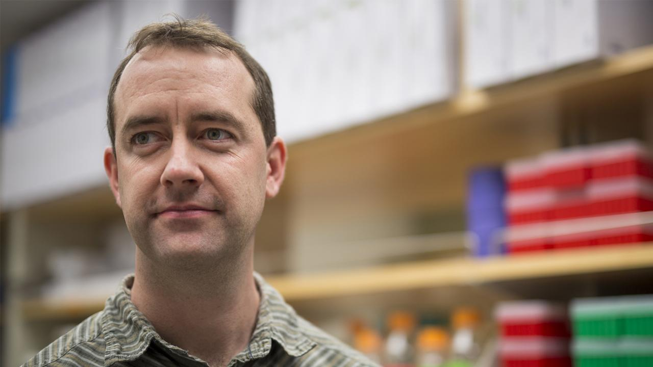 Sean Collins, assistant professor of microbiology and molecular genetics. Fred Greaves/UC Davis