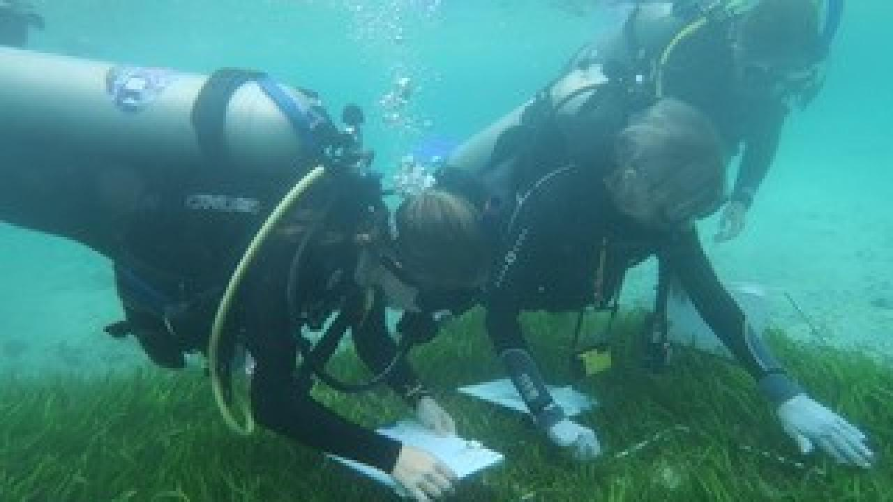 UC Davis researchers monitor seagrass in South Sulawesi, Indonesia (left to right: Jordan Hollarsmith, Susan Williams, Katie DuBois). Christine Sur