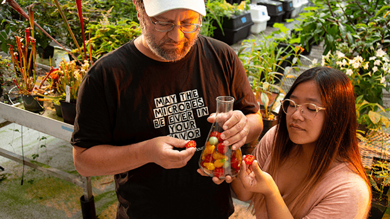 Professor Eisen and Ivy examine a tomato