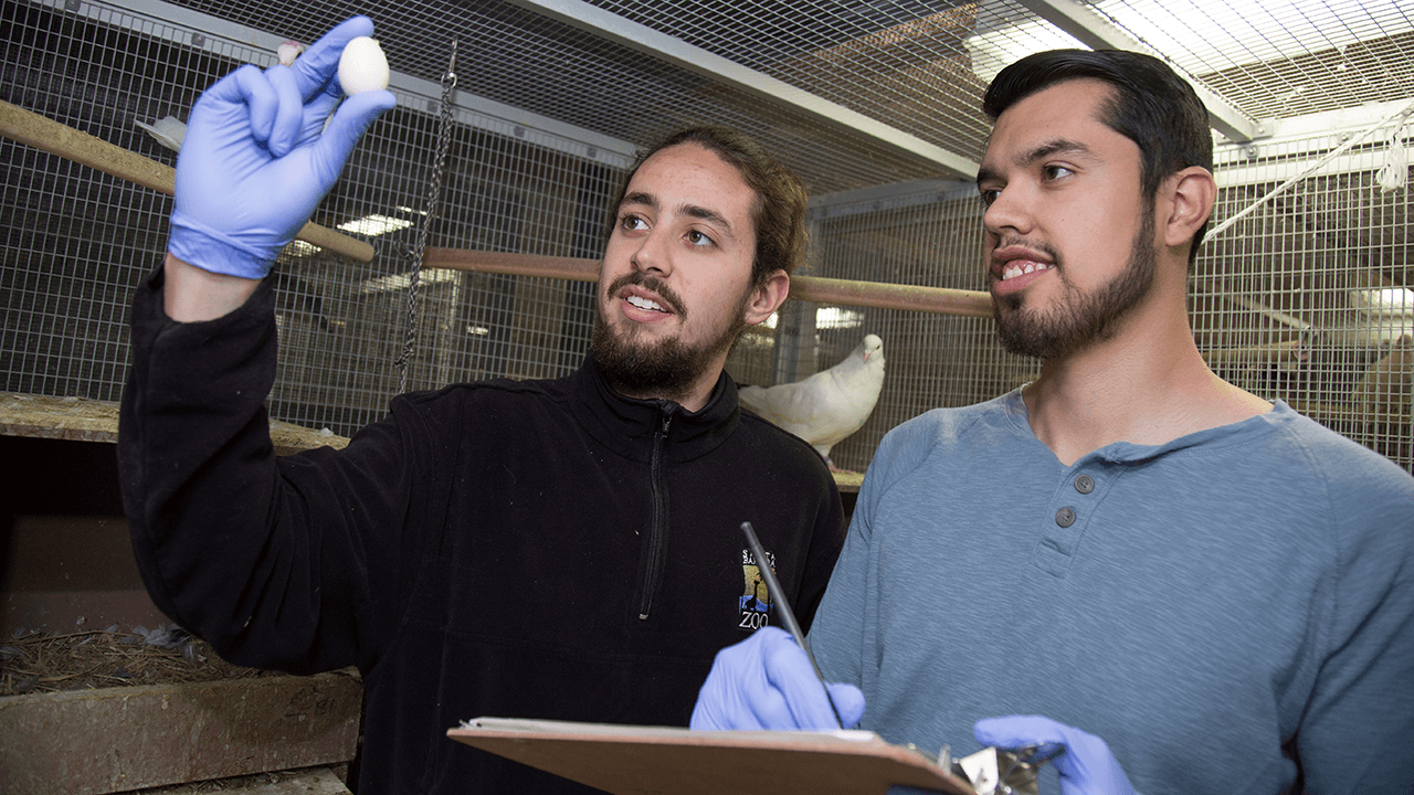 Undergraduate researchers collect data on a pigeon egg in the aviary of Rebecca Calisi