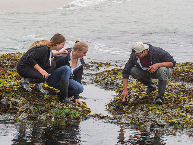 Students visit the tide pools at the Bodega Marine Lab