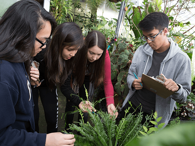 Student examine a fern at the Botanical Conservatory greenhouses