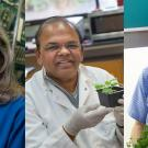 Three faculty members from the UC Davis College of Biological Sciences have been honored this year as Fellows of the American Association for the Advancement of Science (AAAS)