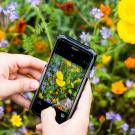 Phone and flowers