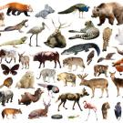 Mosaic of animals