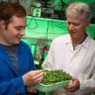 Two men look at plants in a laboratory