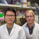 Sharon Lee, a Biochemistry, Molecular, Cellular and Developmental Biology graduate student, and Mark Huising, associate professor of neurobiology, physiology and behavior, study the cellular mechanisms of diabetes. David Slipher/UC Davis