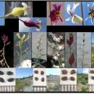A composite image of various jewelflowers