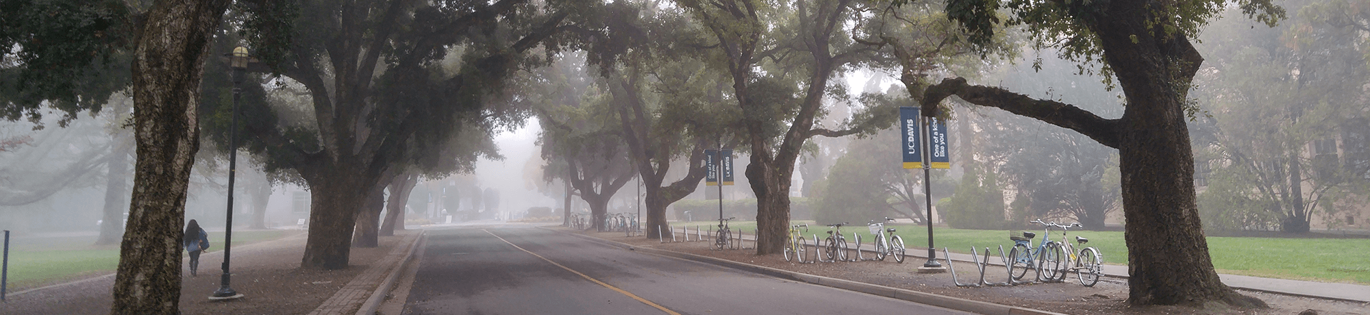Campus during a foggy day